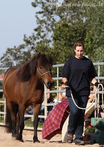 Gelassenheitsprüfung auf der White Horse Ranch