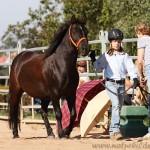 Gelassenheitsprüfung 1, geführt, auf der White Horse Ranch, 2010