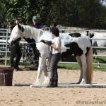 Gelassenheitsprüfung 2, geführt, White Horse Ranch 2010