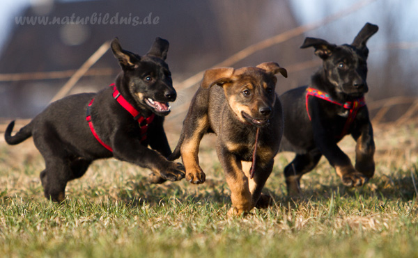 Kiwi, Kira und Nelly