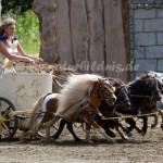 7. Österreichische Shire Horse Show