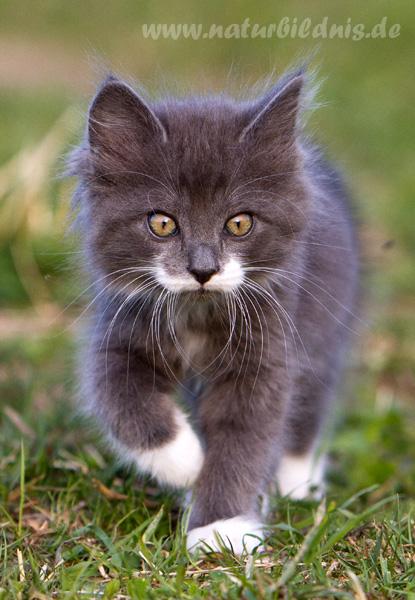Waldkatzenkinder vom Oberwald