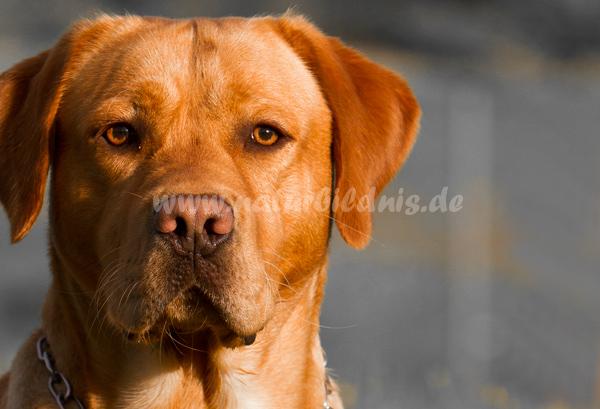 Hundesportclub Penig