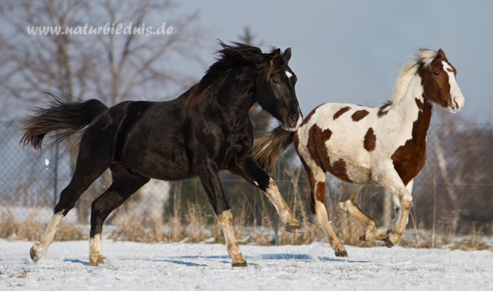 Ludo und Wildfang